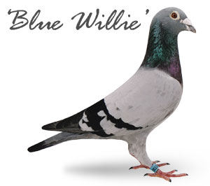 Blue Willie