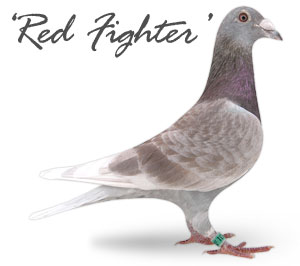 Red Fighter